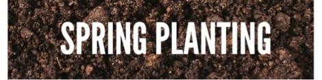 springplanting